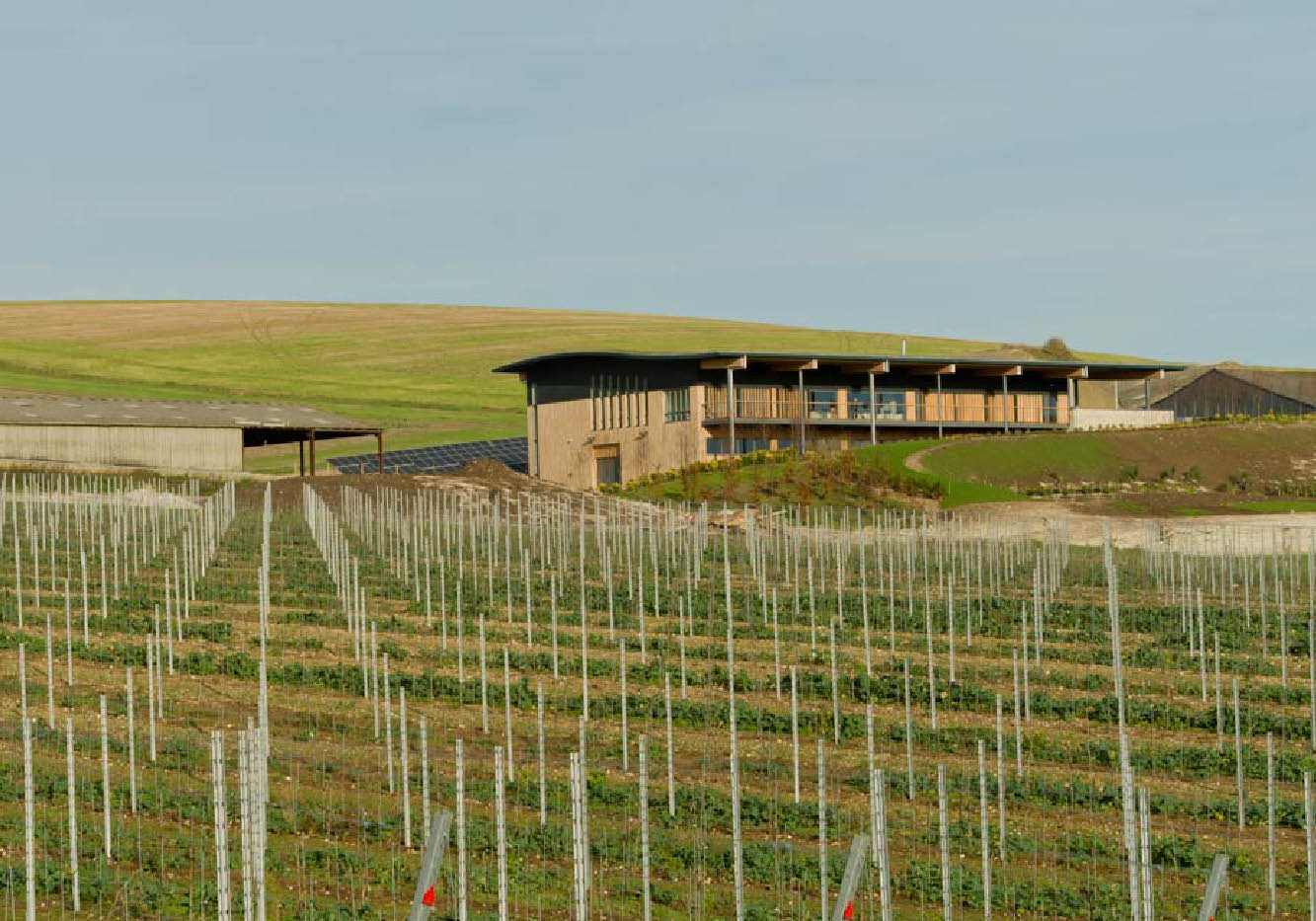 Designcubed Architects Rathfinny Winery 5