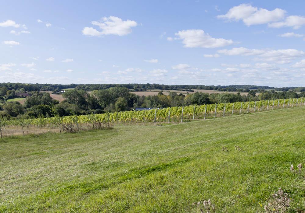 Designcubed Architects Berkshire Winery Sept204