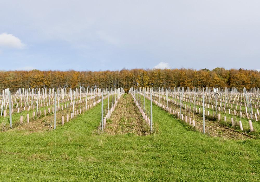Designcubed Architects Berkshire Winery SitePhoto Nov19 3