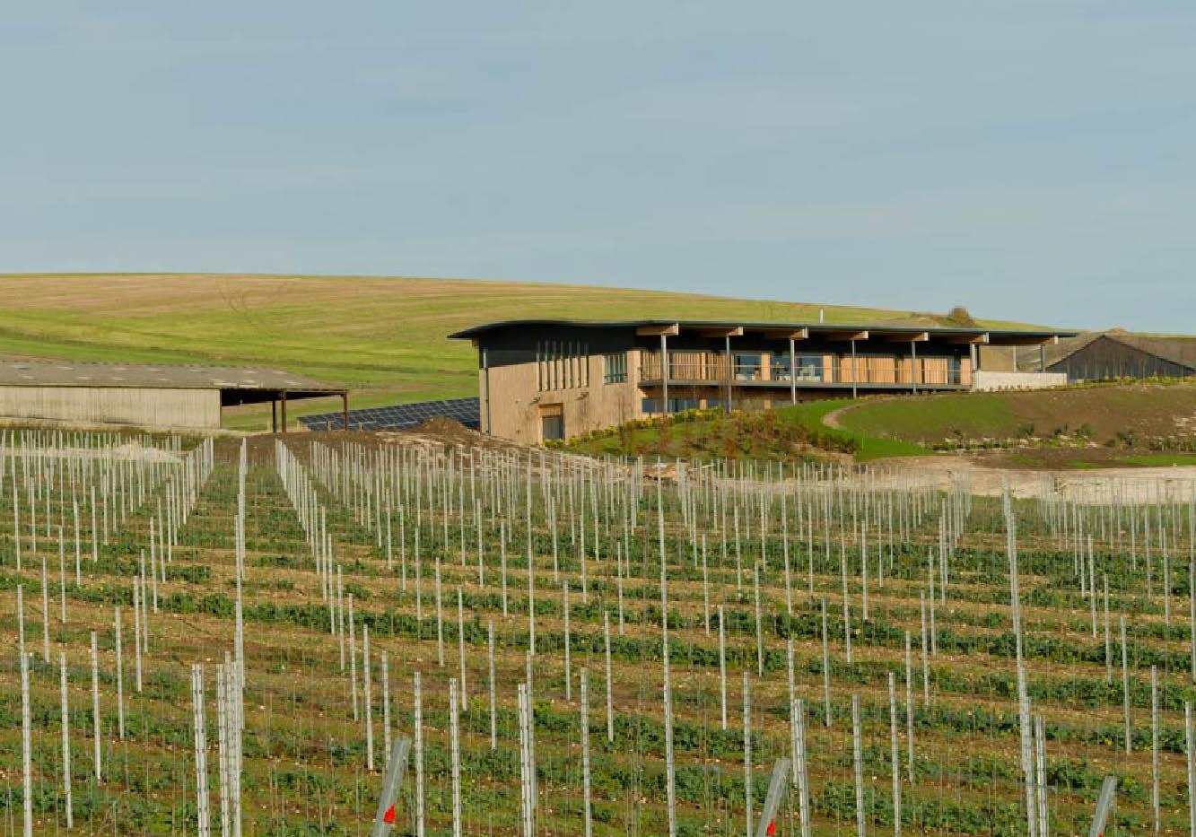 Designcubed Architects Rathfinny Winery 5